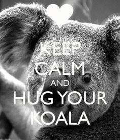 keep-calm-and-hug-your-koala.png 600×700 pixels