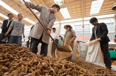 A worker shovels pseudo-ginseng into a bag for a buyer at an open air pseudo-ginseng market in Wenshan, Yunnan Province.