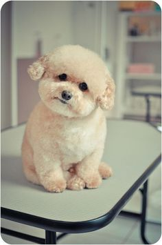 Absolutely adorable ★look at that face