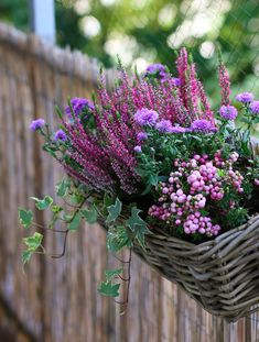 DIY 3 ideas for fall planters for a balcony Mango and Salt Window Box Flowers, Balcony Flowers, Balcony Plants, Balcony Garden, Flower Boxes, House Plants, Balcony Ideas, Olive Garden, Autumn Garden
