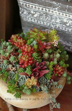 I wish I could successfully grow succulents.