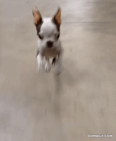 Prancing BT puppy.