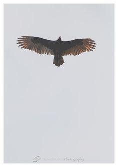 Bald Eagle | Orlando Photographer| Landscape Photography| Sliwa Studios Photography