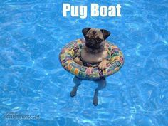 Awsome. I luv pugs!