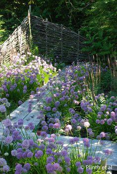 Free Spirit Nursery and Garden  Alliums (Alllium senescens and A.'Summer Beauty') , spill along the zig-zag bridge, a feature…