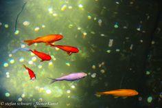 Macroland - etwas Fotokunst - Fische
