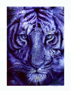 Tigre by reniervivas666 Balllpoint pen blue from deviant art