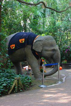 "fake ""halloween"" elephant  in zoorasia (yokohama japan)"