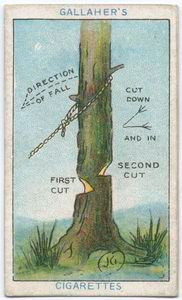 9 best how to cut down a tree images on pinterest home and garden rh pinterest com Felling a Tree with a Chainsaw Plunge Cutting Trees