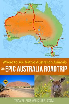 Waar te zien inheemse Australische dieren op een epische road trip van Australië! #Australië... - #Australië #Australische #dieren #een #epische #inheemse #op #road #te #trip #van #waar #zien