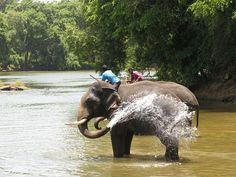 Dubare Elephant Sanctuary - Coorg, India.  by Pooj@, via Flickr