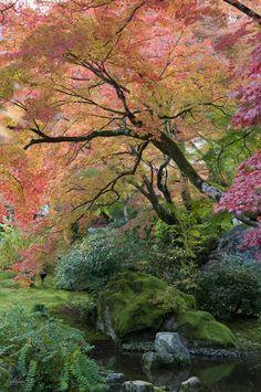 Japanese garden in Autumn Kyoto Garden Garden backyard Garden design Garden ideas Garden plants Beautiful World, Beautiful Gardens, Beautiful Places, Landscape Design, Garden Design, Landscape Photography, Nature Photography, Bonsai Garden, Bonsai Trees