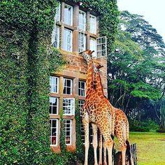 Follow me please for more pictures :) #goodmorning #giraffe #love #bestfriend #happy #animals #instagood #instago #instagram #friends #eyes #outdoors #life #insta #bike #animals #nature #naturelovers #adventure #camp #camping #survivor  #naturelovers  #beautiful #animal #deer #cat  #dog #dogs #loveanimals #instanature