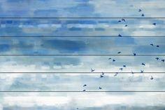 Soaring Flock