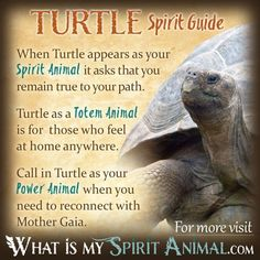 Call on Turtle medicine when you need to take a trip back to childhood and retrieve those parts of you which didn't 'survive'. Turtle energy can help revive those parts of your soul by immersing them in the healing & loving waters of the Universe. Elephant Spirit Animal, Turtle Spirit Animal, Spirit Animal Totem, Animal Totems, Spirit Animal Quiz, Animal Spirit Guides, Fox Totem, Animal Espiritual, Turtle Symbolism