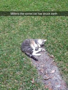 Funny Animal Pictures Of The Day 24 Pics