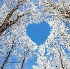 Tree Winter Heart Valentine Picture, Valentine Pics, Heart In Nature, Spring Landscape, Winter Scenery, Love Wallpaper, Vincent Van Gogh, How To Do Yoga, Mother Earth