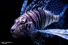 (2012-03) Fish + tiger = figer?
