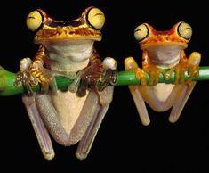 Frog meditation. lol.