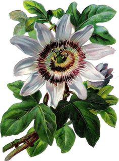 Oblaten Glanzbild scrap die cut chromo Blume flower 13 cm