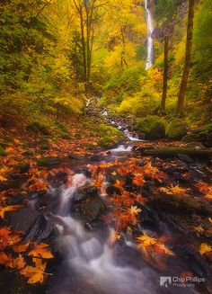 Starvation Creek State Park  Cascade Locks, Oregon