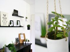DIY: Sukkulenten-Ampeln aus Konservendosen - mein feenstaub – DIY, Deko, Design