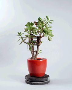 観葉植物で作る「ミニチュアツリーハウス」が可愛いすぎ♡ | TABI LABO