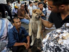 Trade: A customer holds a puppy for viewing at Dashichang dog market ahead of a dog meat f...
