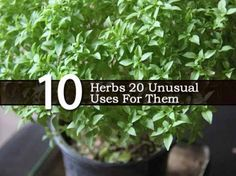 10 Herbs 20 Unusual Uses For Them