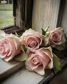 Beautiful Roses, Pretty In Pink, Beautiful Flowers, Parfum Rose, Book Flowers, Flower Phone Wallpaper, Love Rose, Flower Aesthetic, Rose Cottage