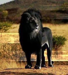 Lu Mendel - Google+ - Ohne Worte. No komment. Black is beautyful.google.com