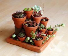 Macetas de suculentas sobre bloques de cemento. No Linde - Incremental Mini - Gardens #nolinde #moss #succulents #pots http://nolinde.com/garden/4