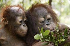 The rainforest - Rainforest Rescue