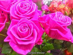 Världens Blommor Roses