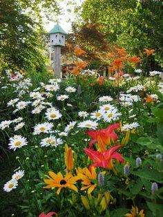 Shasta daisies, Asiatic lilies, birdhouse