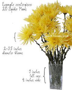 yellow mums; centerpiece | Yellow Anastasia Spiders Flowers - Spider mums