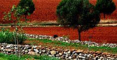 Il paesaggio rurale del Salento e i 5 elementi che lo caratterizzano | Vizionario