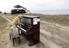 anch'io posso eseguire concerto...e posso anche cantare ...se volete