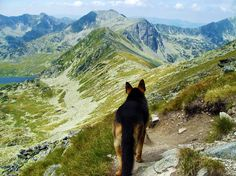 German Shepherd on the mountain by BluetorchQs.deviantart.com on @deviantART