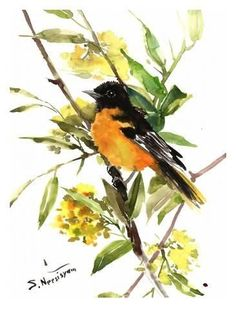 Giclee Print: Baltimore_Oriole by Suren Nersisyan : 32x24in #watercolorarts