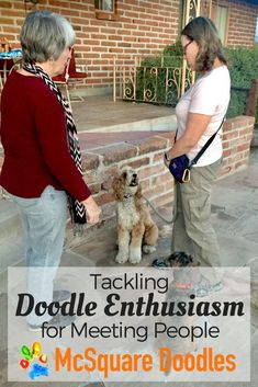 "Bernie McSquare's high level of engagement with me enabled him to ignore another dog as we practiced ""Accepting a Friendly Stranger"" for the AKC's Canine Good Citizen test. #CGC #dogtraining #dogtrainingideas #McSquareDoodles"