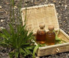 Hogyan használjuk a vadgesztenyét a visszér gyógyítására? Make Beauty, Picnic, Basket, Herbs, Homemade, Health, Tea, Plant, Nature