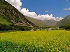 Tibet - végétation
