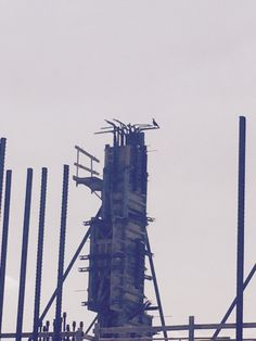 #Raven perched on concrete column under construction at Back River WWTP