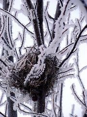 Searching for Nests & Animal Tracks in Winter