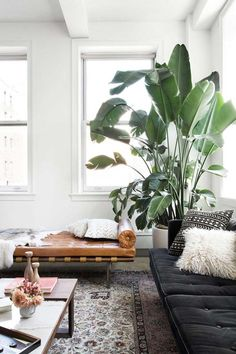 Plants purify air for us. Decorating living room with Indoor plants makes us feel more comfortable and relaxed. Indoor plants are those that can live with minimal or no sunlight. Here are some of the ways to decorate indoor plant in living rooms. Apartment Therapy, Apartment Living, Cozy Apartment, Apartment Plants, Apartment Interior, Apartment Design, Cheap Apartment, Interior Livingroom, Apartment Kitchen