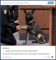 """Dog Swearing""   21 Photos Guaranteed To Make You Laugh Every Time"