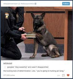 """Dog Swearing"" | 21 Photos Guaranteed To Make You Laugh Every Time"