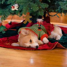 MERRY CHRISTMAS EVE TO ALL, AND TO ALL... I want presents