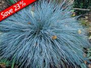 Ornamental Grasses - 37 Types of Ornamental Grasses. Great with KnockOut Roses, Thuja Green Giant, Hydrangeas.
